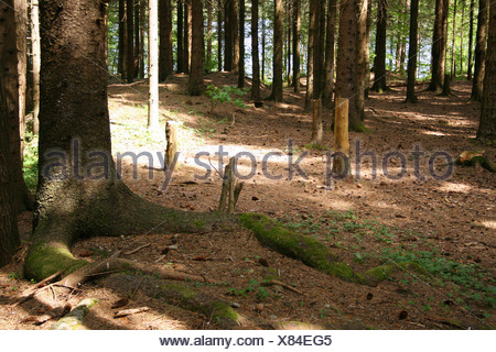 Sunlight and shaddow in the deep forrest. - Stock Photo