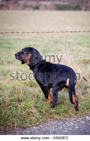 Puppy in front of barbed wire on a fence - Stock Photo