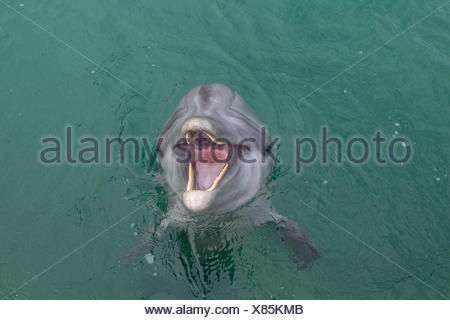 Laughing Dolphin. - Stock Photo