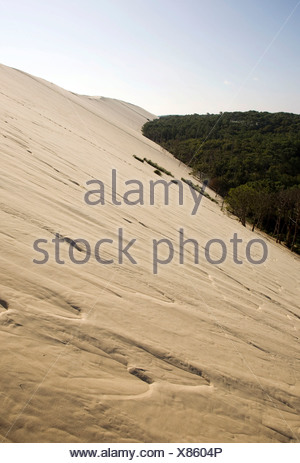 Pine forest at the dune of Pyla, Dune du Pilat, biggest dune in Europe on the Atlantic coast near Arcachon, Departement Gironde - Stock Photo