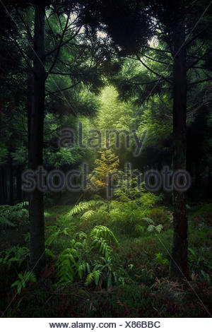 Wood on Sao Miguel, the Azores, Portugal - Stock Photo