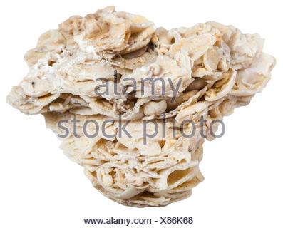 coquina limestone (shell rock) mineral isolated - Stock Photo