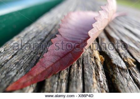 bank, lending institution, leaf, autumnal, transitoriness, perishable, fall, - Stock Photo
