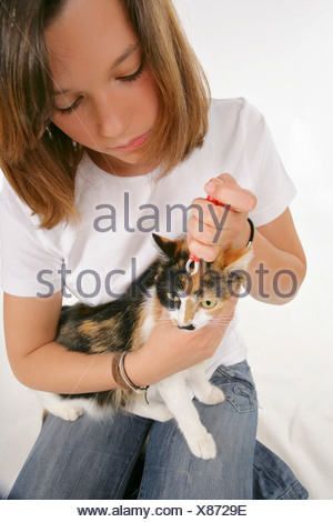 cat gets a tick removed - Stock Photo
