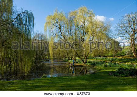 A woman and a dog standing on a jetty on a lake, with weeping willow fronds reaching down to the water. - Stock Photo