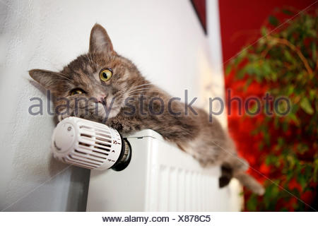 Lazy cat lying on a heater - Stock Photo