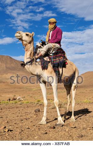 Tuareg, Targi, man sitting on a camel, Hoggar, Ahaggar Mountains, Wilaya Tamanrasset, Algeria, Sahara, North Africa, Africa - Stock Photo