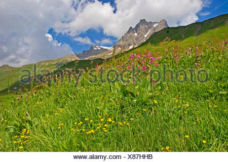 Bergwiese am Hochtannbergpass in den Allgaeuer Alpen, Oesterreich, Allgaeu | mountain meadow at the Hochtannbergpass at the  All - Stock Photo
