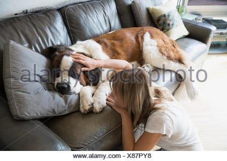 Woman petting sleeping Saint Bernard dog on sofa - Stock Photo