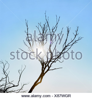 Low angle view of a bare tree - Stock Photo