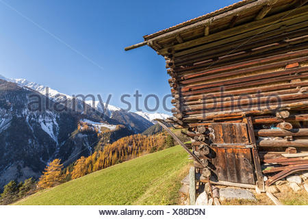Wooden cabin surrounded by colorful woods and snowy peaks Schmitten Albula District Canton of Graubünden Switzerland Europe - Stock Photo