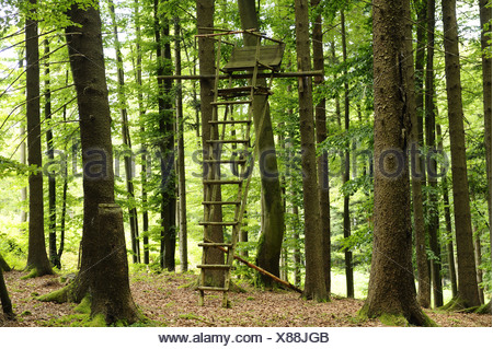 raised hide in a spring forest, Germany, Bavaria, Upper Palatinate - Stock Photo