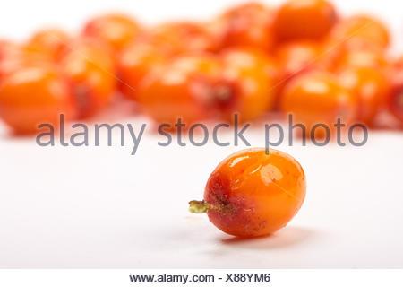 .Sea-buckthorn berries - Stock Photo