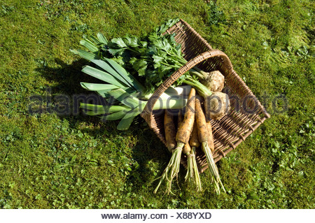 Vegetables in basket - Stock Photo