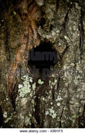 Bird hole in tree trunk - Stock Photo