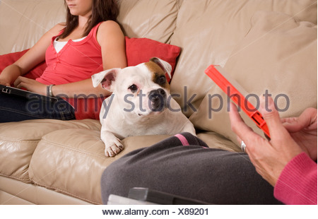 staffordshire bull terrier dog sitting between owners on sofa - Stock Photo