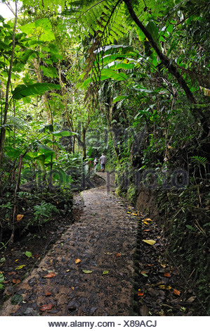Paved jungle path in a cloud forest, Selvatura Park, Monteverde, province of Alajuela, Costa Rica, Central America - Stock Photo