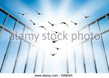 fly overcome the difficult gate - Stock Photo