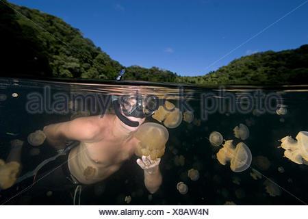 Micronesia, Free-Diver amongst non-stinging and Moon Jellyfish of Palau's Jellyfish Lake; Palau - Stock Photo