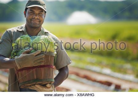 New York state USA man holding basket freshly harvested vegetables - Stock Photo