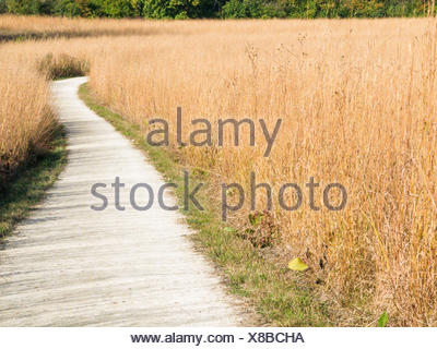 Nature trail through grass - Stock Photo