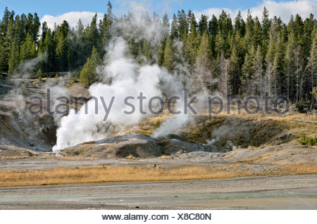Black Growler Steam Vent, Porcelain Basin, Norris Geyser Basin, Yellowstone National Park, Wyoming, USA - Stock Photo