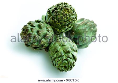 Artichokes (Cynara cardunculus, syn. Cynara scolymus) - Stock Photo