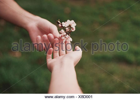 Two people sharing flower - Stock Photo