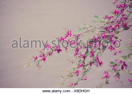 Low Angle View Of Pink Flowers On Twig - Stock Photo