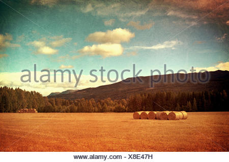 Field with hay bales vintage photo. - Stock Photo