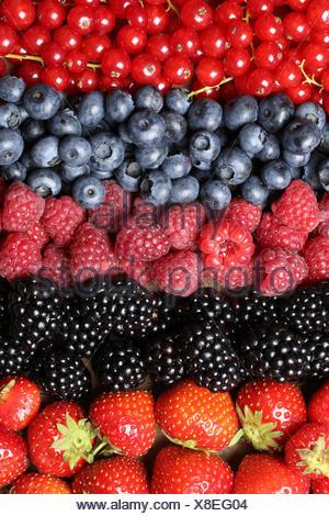 Frische Früchte wie Erdbeeren, Blaubeeren, Himbeeren und Brombeeren in einer Reihe - Stock Photo