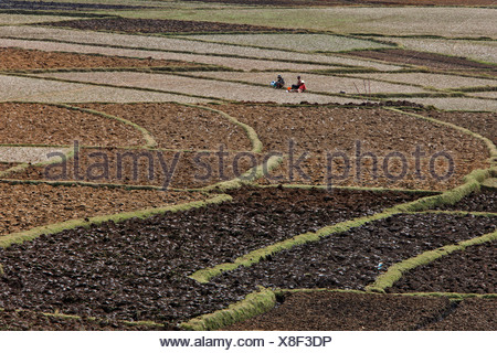 Rice paddies in the central highlands, Madagascar, Africa