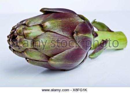Single artichoke (Cynara cardunculus, Syn. Cynara scolymus), close up - Stock Photo