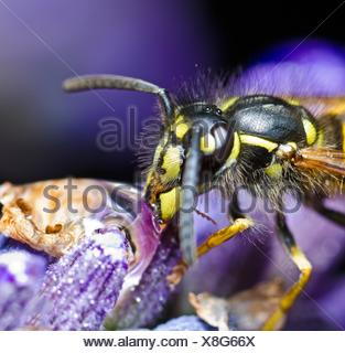 Extreme Close-Up Of Honey Bee On Flower - Stock Photo