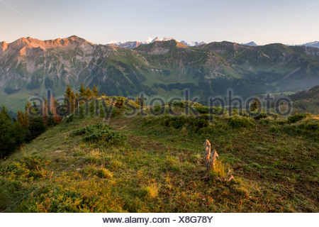 Alps view tree stump mountain Brienzer Rothorn Entlebuch view spruce High Gumme canton Lucerne scenery landscape morning natu - Stock Photo