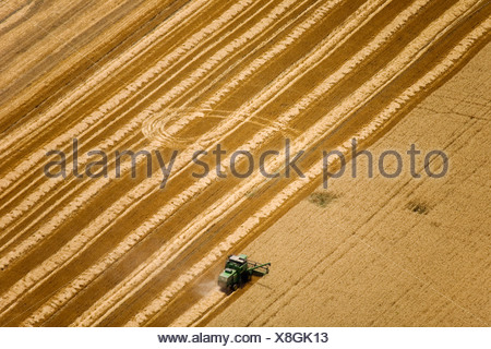 Agriculture - Aerial view of a combine harvesting wheat / Uruguay. - Stock Photo