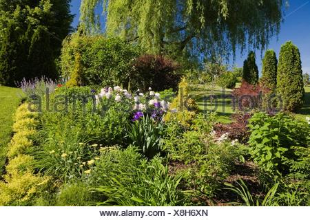 Weeping willow tree in garden stock photo 1478722 alamy garden border with spiraea japonica gold flame pink peony yellow yarrow flowers mightylinksfo Images
