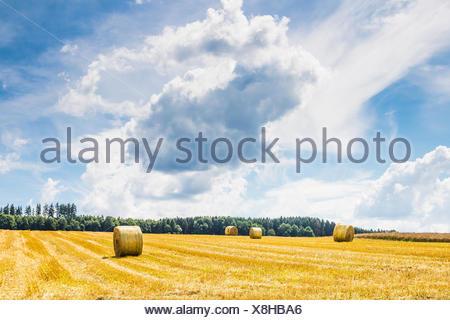 round straw bales on a stubble field between dankelshausen and bühren, samtgemeinde dransfeld, göttingen district, lower saxony, germany, summer 2017 - Stock Photo