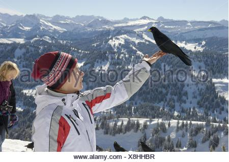 human and alpine yellow-billed chough - Stock Photo