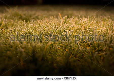 Frost on grass, close up - Stock Photo