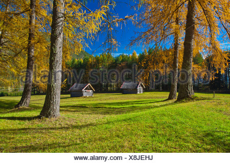 Austria, Europe, Gurgltal, Nassereith, meadows, Stadel, trees, larches, spruces, green, Yellow, blue, sky, nature, man-made, cul - Stock Photo