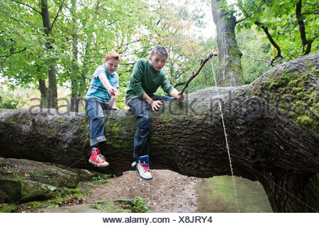 Boys fishing from a fallen tree - Stock Photo