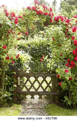 Garden Wooden Gate Rose Arch Climbing Roses Summer