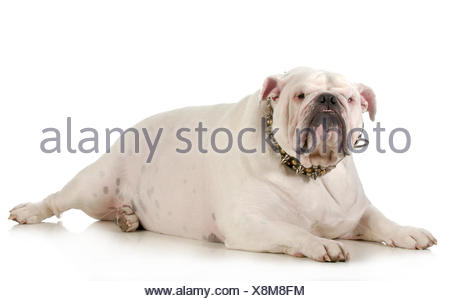 humans, human beings, people, folk, persons, human, human being, isolated, - Stock Photo