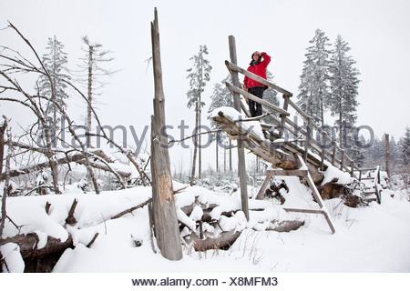 woman on snowy Kyrill path looking at storm losses, Germany, North Rhine-Westphalia, Sauerland, Schmallenberg - Stock Photo