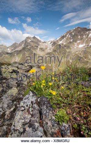 Europe Tyrol Austria Urgtal Alps alpine mountain mountain landscape Europe idyll mountainous mountains stone stony rock scenery - Stock Photo