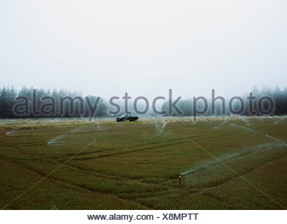 A cranberry farm in Massachusetts The crops growing in the fields - Stock Photo
