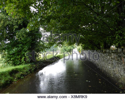Wet Country Road Along Stone Wall - Stock Photo