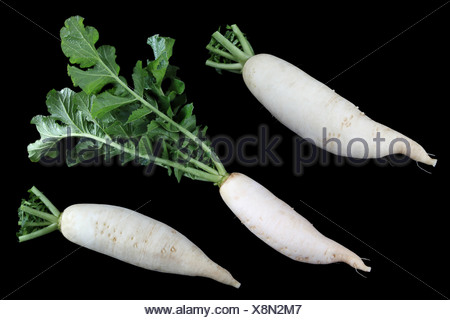 white radish - Stock Photo