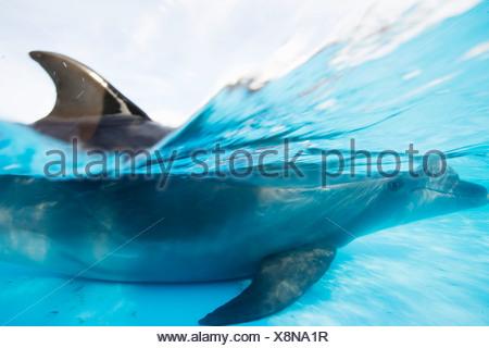 Dolphin swimming underwater - Stock Photo